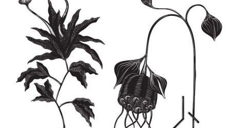 Cosmjn – Organik EP
